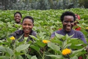 Over 44K Rwandan Farmers And SMEs To Benefit From A Netherlands-Funded Project