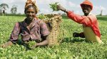 AfDB Gives Africa's Agricultural Sector USD 740 K From USD 23 Mn Fund