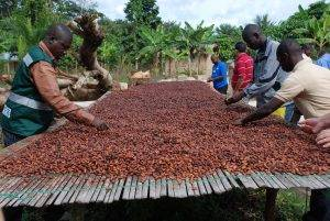 Kenya Unveils Cocoa Production With Help Of Investor