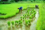 Nigerian Farmers To Benefit From USD 58 Mn Project Focused On Deepening Food Security