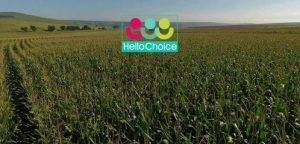 South African Startup HelloChoice Secures Investment